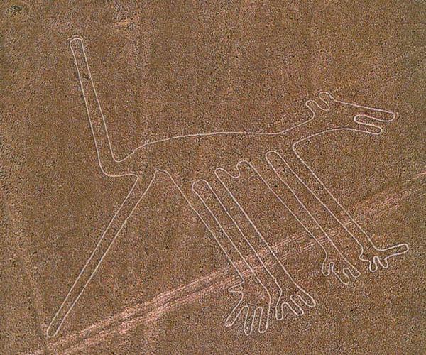 Linee di Nazca Coyote